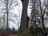 Melko isoja puita